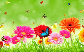 beautiful floral flowers wallpapers download