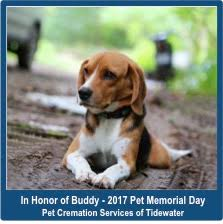 pet cremation nj national pet memorial day pet cremation services of tidewater