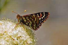 butterflies catch them before the season flits by oregonlive com
