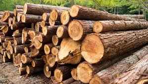 india third largest importer of illegally logged wood study