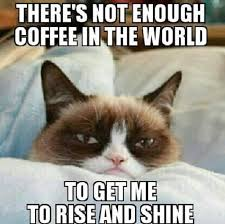 Monday Cat Meme - 21 grumpy cat memes you can relate to every monday of your life