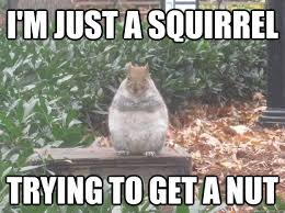 Squirrel Nuts Meme - squirrel trying to get a nut meme trying best of the funny meme