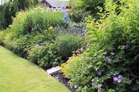 summer garden lawn with perennial border in bloom stock photo