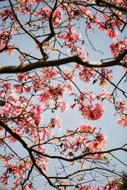 Brisbane Botanic Gardens Mount Coot Tha by 25 Melhores Ideias De City Botanic Gardens No Pinterest Brasil