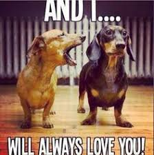 Dachshund Meme - dachshund memes and wiener dog humor wiener dogs dachshunds and dog