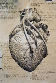 have an obsession with anatomical hearts heart anatomical