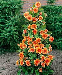 buy cascading rose u0027orange velvet u0027 bakker com