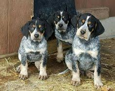 bluetick coonhound figurine reserved for katie bluetick coonhound christmas ornament figurine