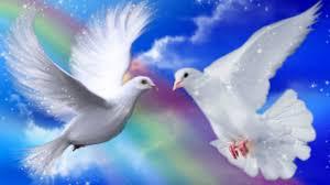 rainbow rainbow doves blue sky romantic wallpaper nature for hd