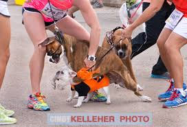 Halloween Costumes Boxer Dogs 123 Dog Halloween Costumes Images Legged