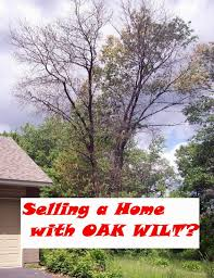 selling a home with oak trees or oak wilt