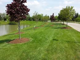 Lawn Landscape by Salient Landscaping Residential And Commercial Landscaping And