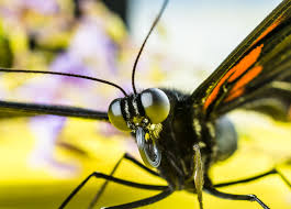 black and orange butterfly free stock photo