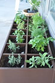 balkon krã uter 19 best garden organizing images on gardening plants
