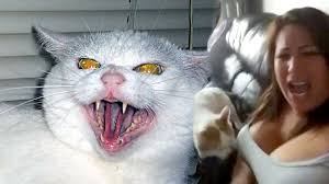 cats are evil demon kitty keeps biting woman ftd replies youtube