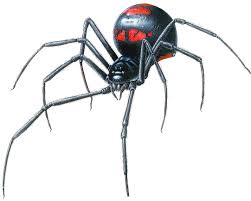 Black Widow Spiders Had A - black widow spider clipart free download best black widow spider