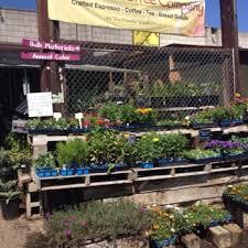 city farmers nursery 426 photos u0026 238 reviews nurseries