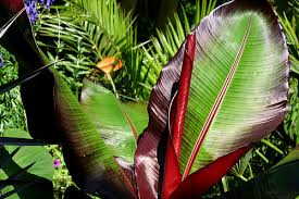 Tropical Plants Pictures - leicester tropical plants leicester gardening services