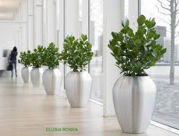 29 beautiful decorating office with plants yvotube com