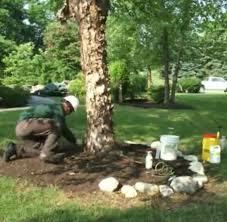 blog ping u0027s tree service