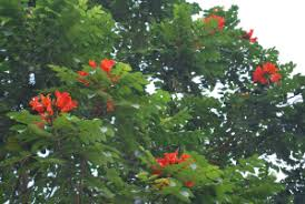 ornamental plants cainta plant nursery