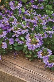 best spring gardening flowers southern living