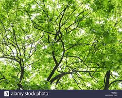 colorful tree leaves close up shot close up shot nature stock