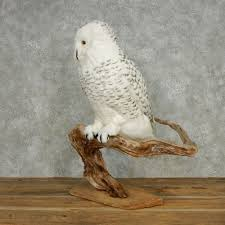 Owl Item by Reproduction Snowy Owl Mount 13551 The Taxidermy Store
