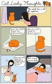 Why Does My Cat Sleep On My Bed Best 25 Cat Meowing At Night Ideas On Pinterest Cat Pattern