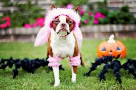 animals halloween these peace loving pooches just want their feline friends to get