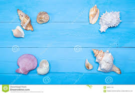assorted seashells assorted seashells on blue wooden background flat lay copyspace