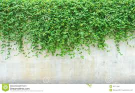 ornamental plants on wall stock photography image 33771492