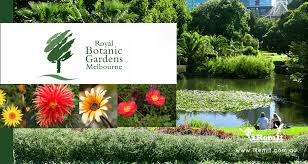 Botanical Gardens Melbourne 5 Budget Friendly Ways To Explore The Royal Botanic Gardens