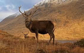 wildlife images Scottish animals wildlife visitscotland