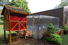 basic chicken coop needs with small chicken coop building plans