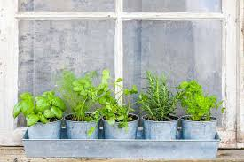 window herb harden how to plant a window herb garden feast and farm