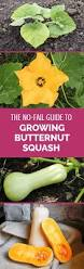 best 25 growing squash ideas on pinterest growing zucchini