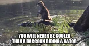 Funny Raccoon Meme - you may think you re cool but imgflip