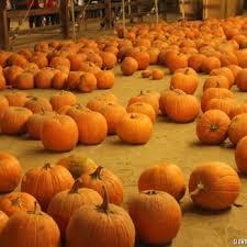 halloween harvest festival closed 120 photos u0026 60 reviews
