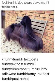 Tired Dog Meme - i feel like this dog would curve me if i tired to pet it funnytumblr