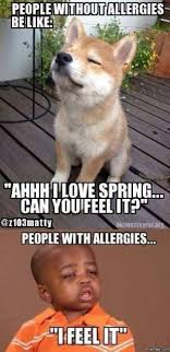 11 best allergy funnies images on pinterest ha ha hilarious and