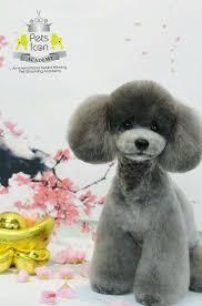 170 best hundar images on pinterest poodle grooming poodle cuts
