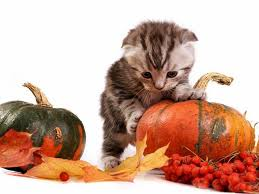 cute simple halloween background cute animal halloween wallpapers u2013 halloween wizard
