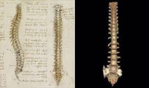Leonardo Da Vinci Human Anatomy Drawings Leonardo Da Vinci How Accurate Were His Anatomy Drawings Bbc News