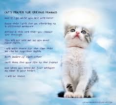 pet prayer cat s prayer for grieving humans bedroom decor cat