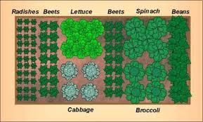 fantastic how to design a vegetable garden layout vegetable garden