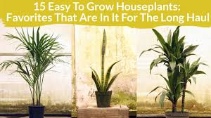 Houseplants by 15 Easy Care Houseplants Favorites In It For The Long Haul Youtube