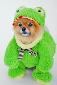 in costumes 53 dog costumes ideas for pet costumes