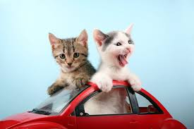 traveling with cats images Cats and car trips tips to make traveling easier jpg
