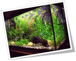 filters vacuum cleaner of your aquarium saltwater and